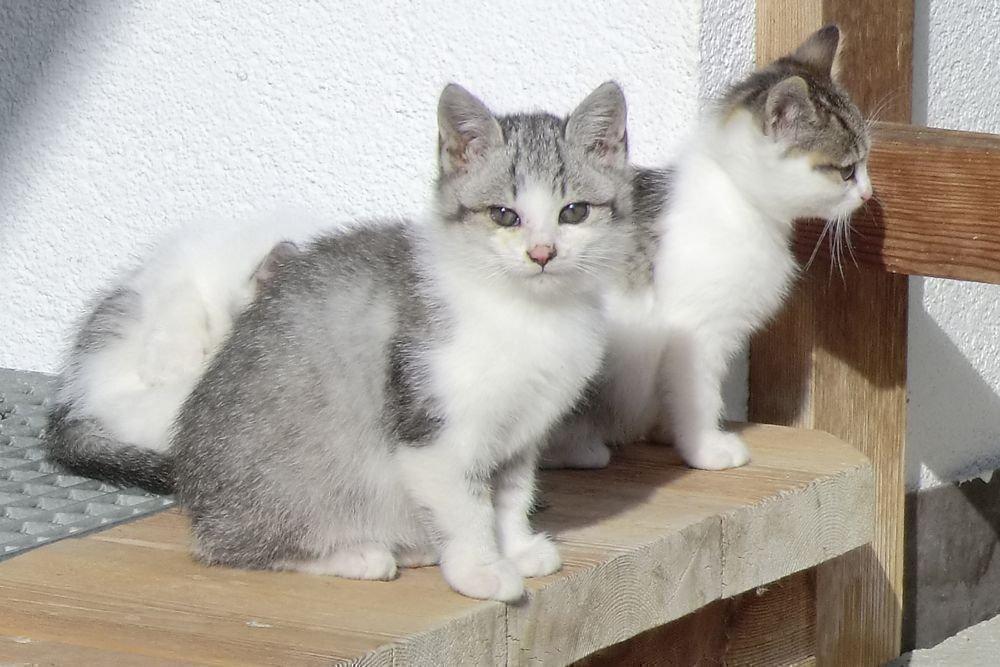 Katzen - Jagerhof